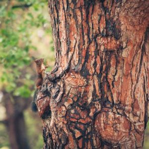 The Varying Services That Tree Professionals Provide