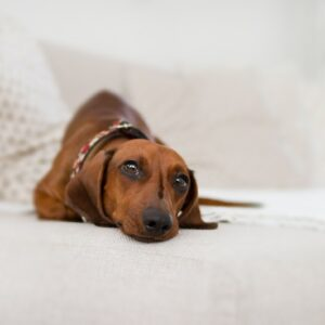 Reasons to Buy Your Dog a Comfortable Bed – Recommended Options to Consider